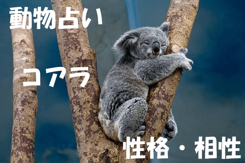 動物占い コアラ