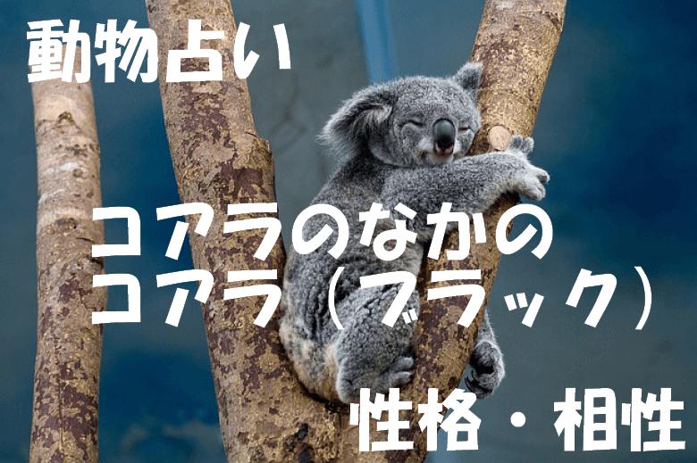 動物占い コアラ ブラック