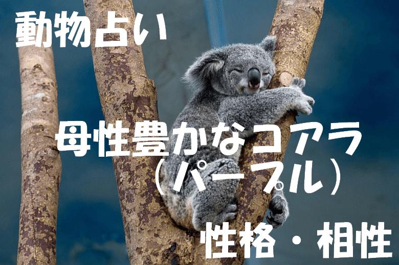 動物占い コアラ パープル