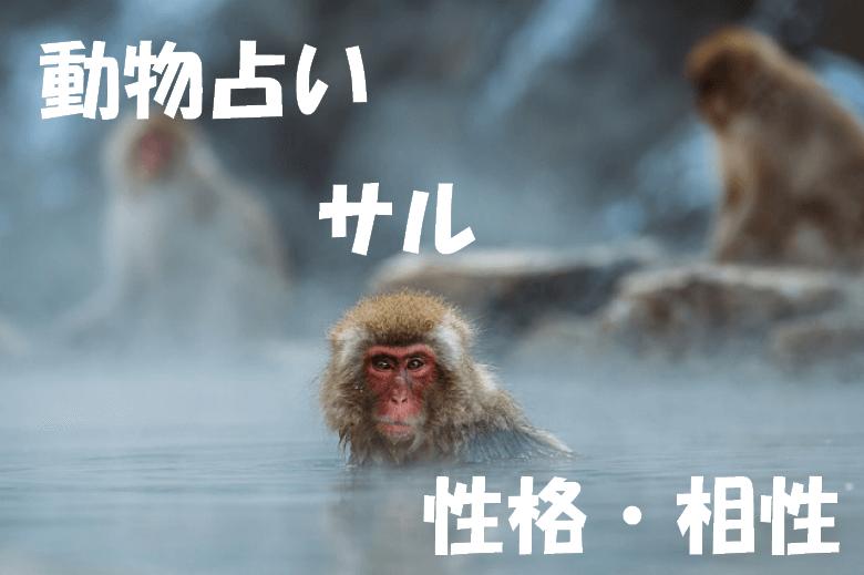 動物占い サル