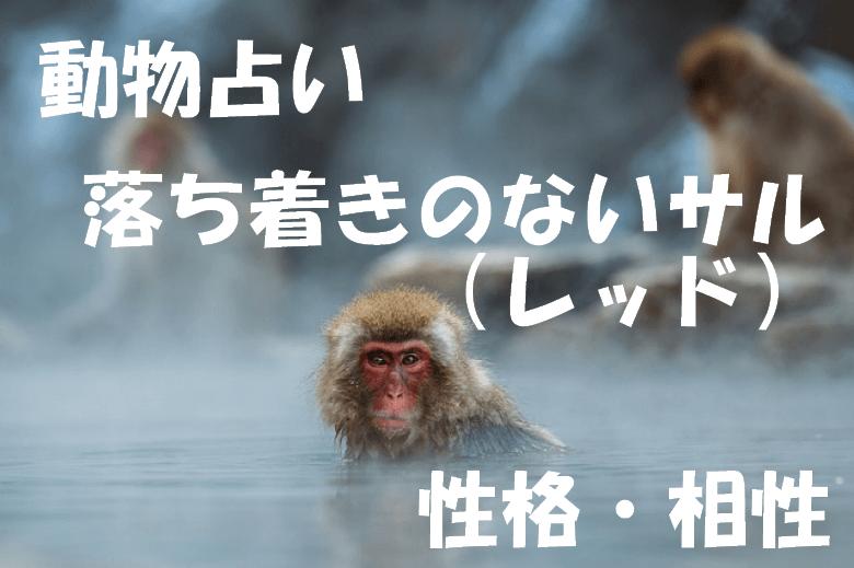 動物占い サル レッド