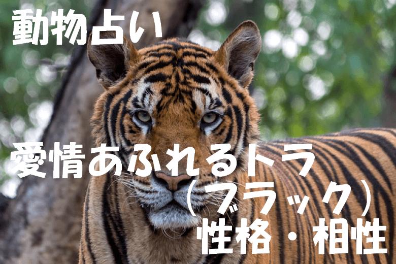 動物占い トラ ブラック