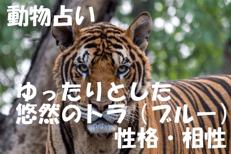 動物占い トラ ブルー