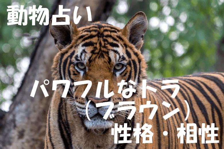 動物占い トラ ブラウン