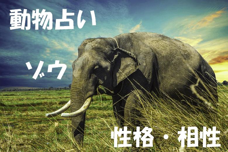 動物占い ゾウ