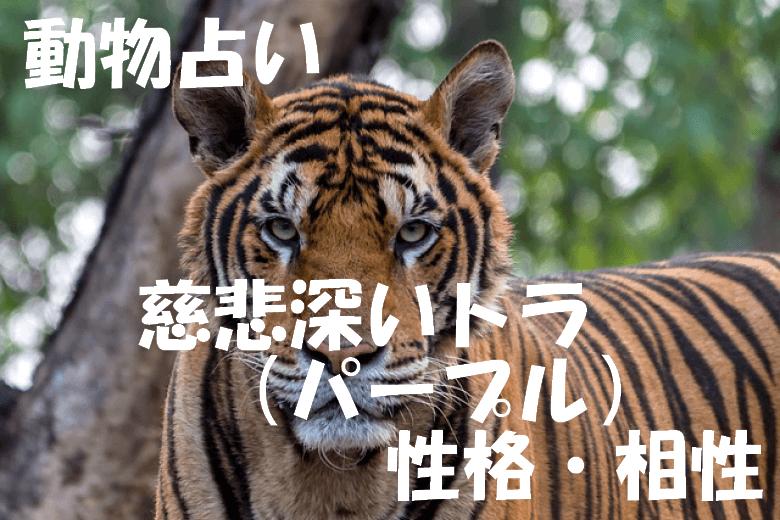 動物占い トラ パープル